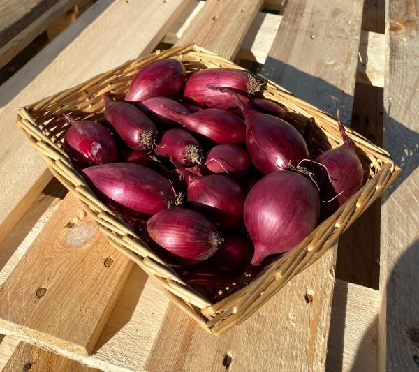 Rote Zwiebeln aus Rumänien